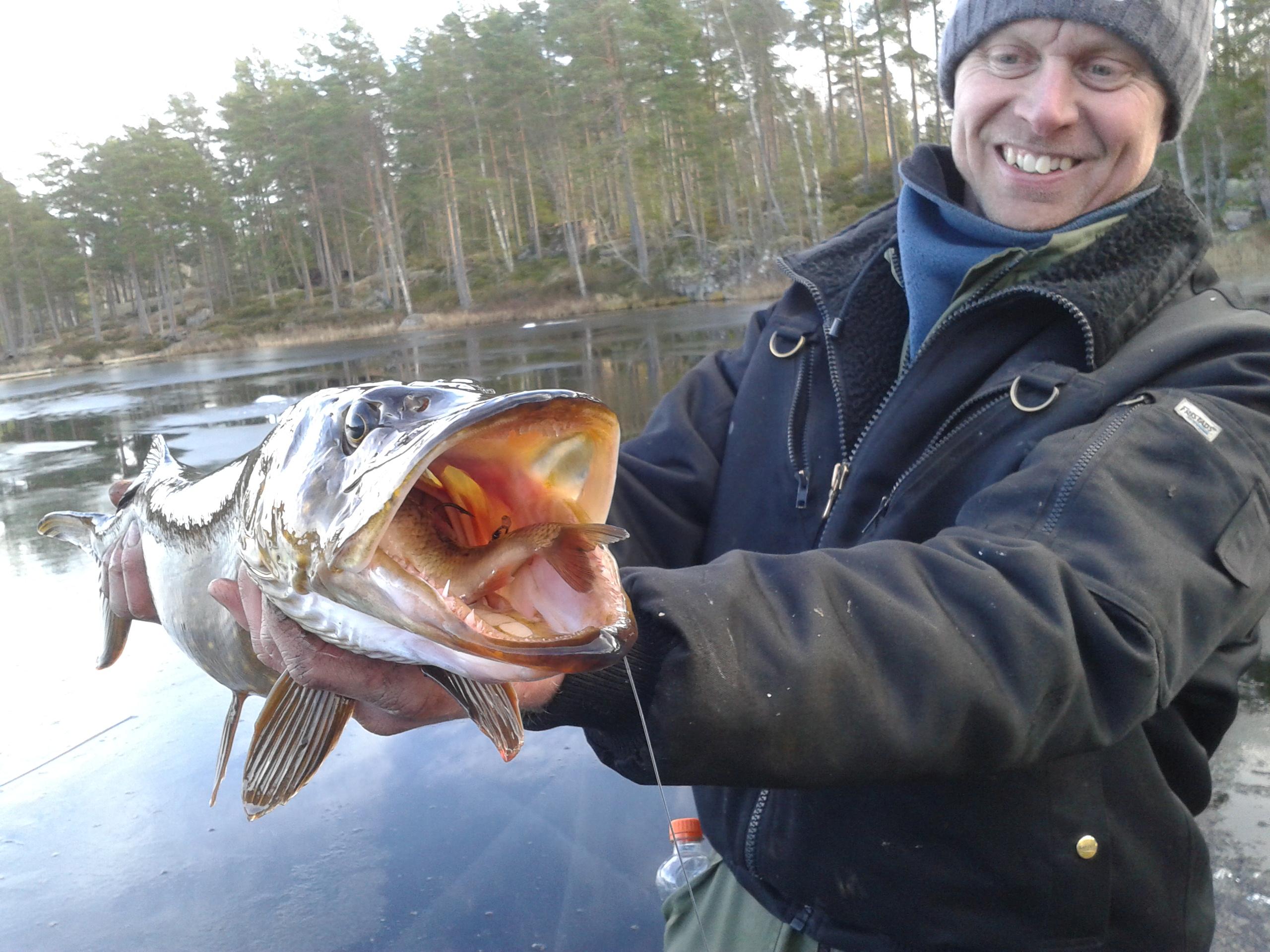 Gäddfångst Lilla Hällesjön 2016-01-31.