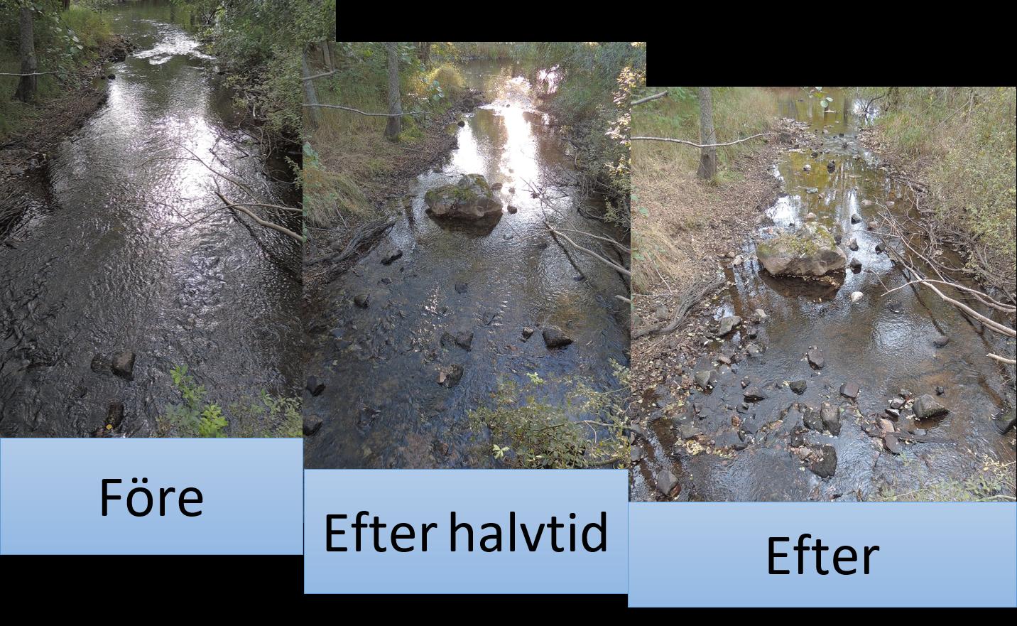 Före och efter biotopvårdsåtgärd i Cylinderkvillen.
